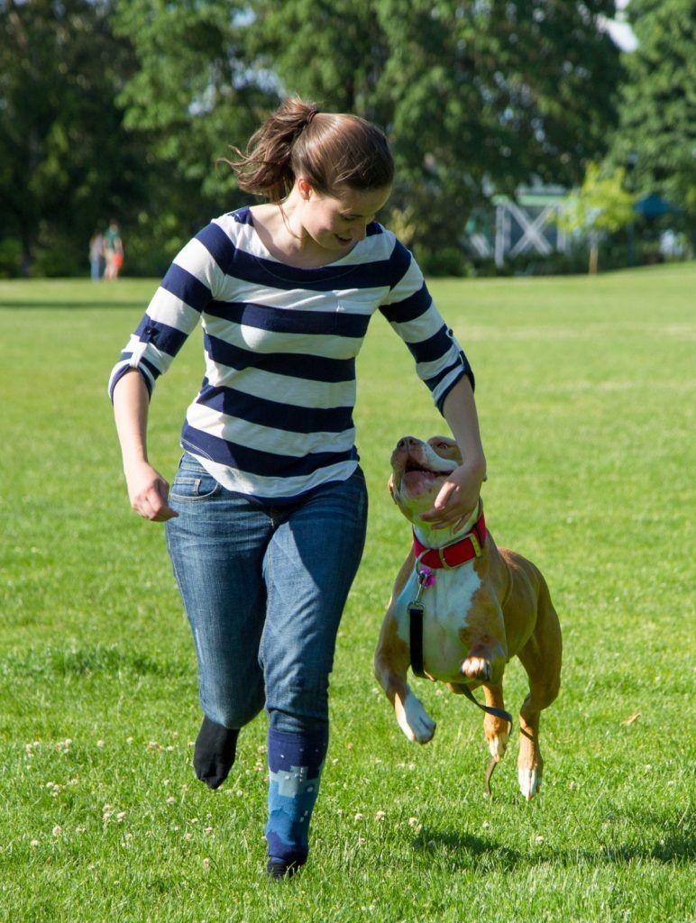 entrenamiento perro pitbull